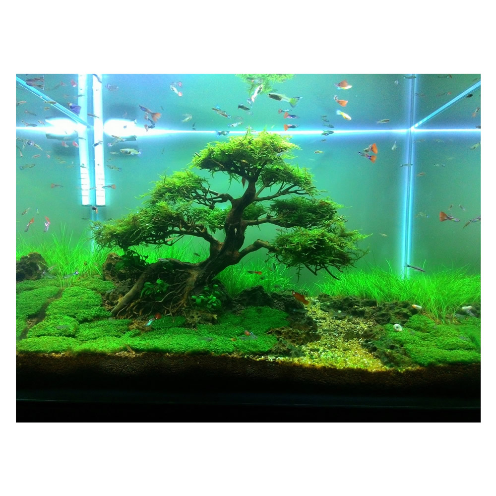 Aquarium Bonsai Tree Banyan Size S (20x20x11)